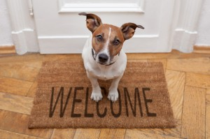 dreamstime_s_26629661 Welcome Dog