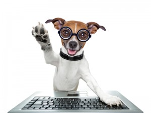 dreamstime_s_37139253 Dog with Hand Up Computer